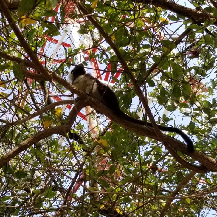 monkey-tree.jpg
